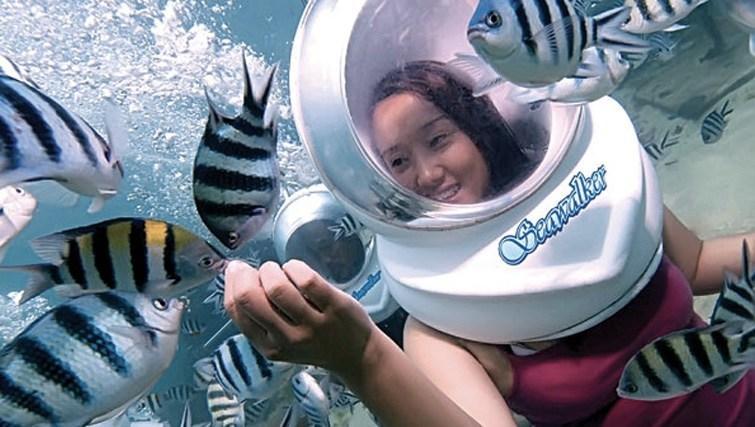 life aquatic in bali
