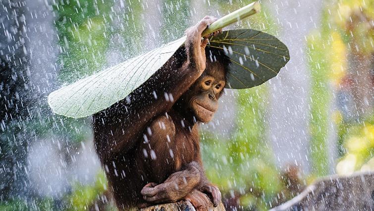 wet_season_bali