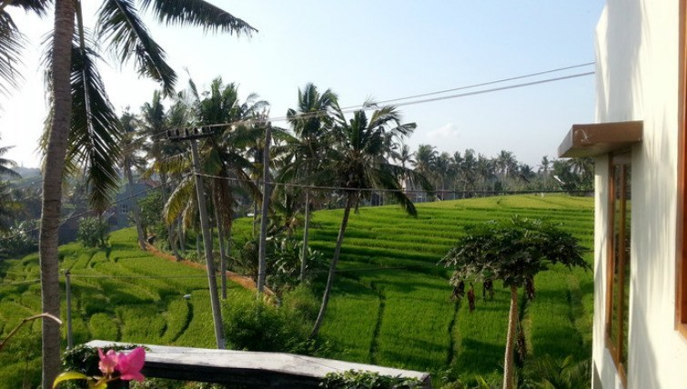 Bali Homestay with Nincy in Canggu, live amongst the rice fields